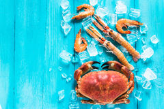 Colorful sea food on wooden blue backgound Royalty Free Stock Photo