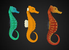 Colorful sea horses Royalty Free Stock Photography