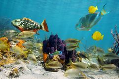 Colorful sea life. In a coral reef with tropical fish around tube sponges Royalty Free Stock Image