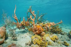 Colorful sea life underwater with sponge and coral Royalty Free Stock Photography