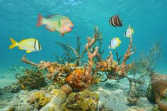 Colorful sea life underwater with tropical fish Royalty Free Stock Photo