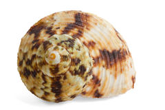 Colorful sea shell Royalty Free Stock Photos