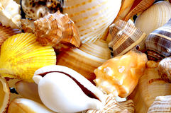 Colorful Sea Shells. Bright and beautiful seashells in a pile Royalty Free Stock Photography