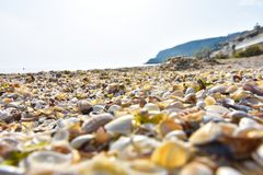 Colorful sea shells as background stock photo