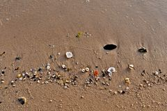 Colorful sea shells on the golden sand of the beach in Saudi Arabia stock photos