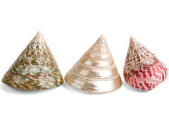 Colorful sea shells Royalty Free Stock Photo