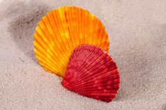 Colorful sea shells of  mollusk on sand Stock Photos