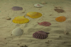 Colorful sea shells Royalty Free Stock Photography