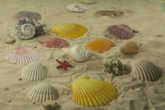 Colorful sea shells Royalty Free Stock Photo