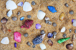 Colorful Sea Shells on a Sand Bed Royalty Free Stock Images