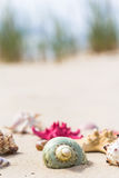 Colorful sea shells sandy beach Royalty Free Stock Photography