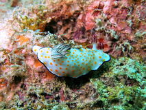 Colorful sea slug Stock Images