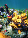 Colorful sea sponges Stock Images