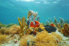 Colorful sea sponges under the water royalty free stock photos