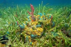 Colorful sea sponges underwater Stock Photos