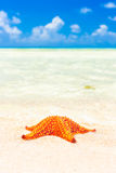 Colorful sea star in the shore of a turquoise sea Royalty Free Stock Photo