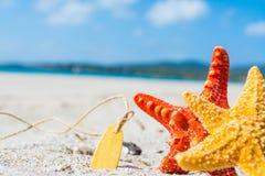 Sea stars on the sand Stock Photos