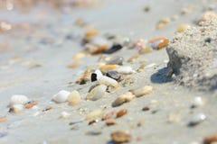 Colorful sea stones on a coast. Colorful sea stones on a sandy coast stock photography