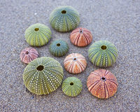 Colorful sea urchins on the beach Stock Image