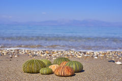 Colorful sea urchins on the beach Royalty Free Stock Photography