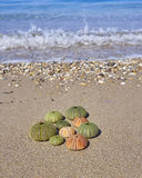Colorful sea urchins on the beach Royalty Free Stock Image