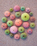 Colorful sea urchins on the beach Stock Photo