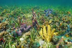 Colorful seabed with sea sponges on a coral reef Stock Photo