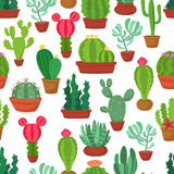 Colorful seamless pattern of funny cactus and succulent. Houseplant and wild cactus background. Royalty Free Stock Photography