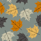 Colorful seamless pattern with maple leaves Stock Photography