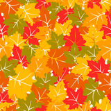 Colorful seamless pattern with maple leaves Royalty Free Stock Photos