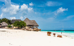 Colorful seascape with african cows and huts on the beach Royalty Free Stock Images