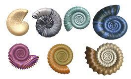 Colorful Seashell Collection Stock Photos