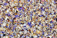 Colorful seashell accumulation Stock Photography