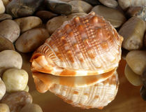 Colorful seashell reflection with zen pebbles Stock Photography
