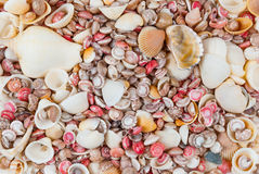 Colorful Seashell Texture/Background Royalty Free Stock Photos
