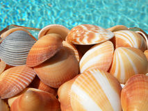 Colorful Seashells royalty free stock photo