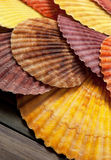 Colorful seashells. Some colorful seashells on a wooden mat Royalty Free Stock Photography