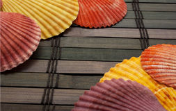 Colorful seashells. Stock Image