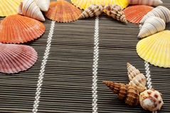 Colorful seashells. Royalty Free Stock Photos