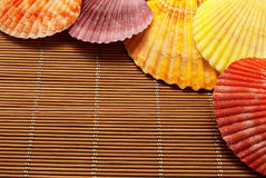 Colorful seashells. Stock Photography