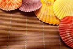 Colorful seashells. Stock Photography