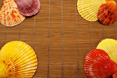Colorful seashells. Stock Images