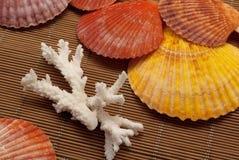 Colorful seashells. Royalty Free Stock Photos