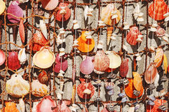 Colorful seashells Stock Image