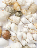 Colorful seashells. Various colorful seashells with white background. design element Stock Images