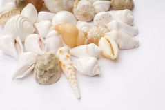 Colorful seashells. Various colorful seashells with white background. design element Stock Photos