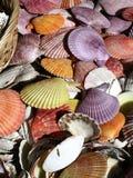 Colorful seashells. A closeup view of a pile of colorful seashells stock photos