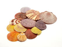 Colorful seashells. Different color seashells isolated on white background Royalty Free Stock Images