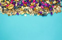 Colorful seashells background with copy space royalty free stock photography