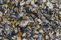 Colorful seashells at Black Sea Stock Image